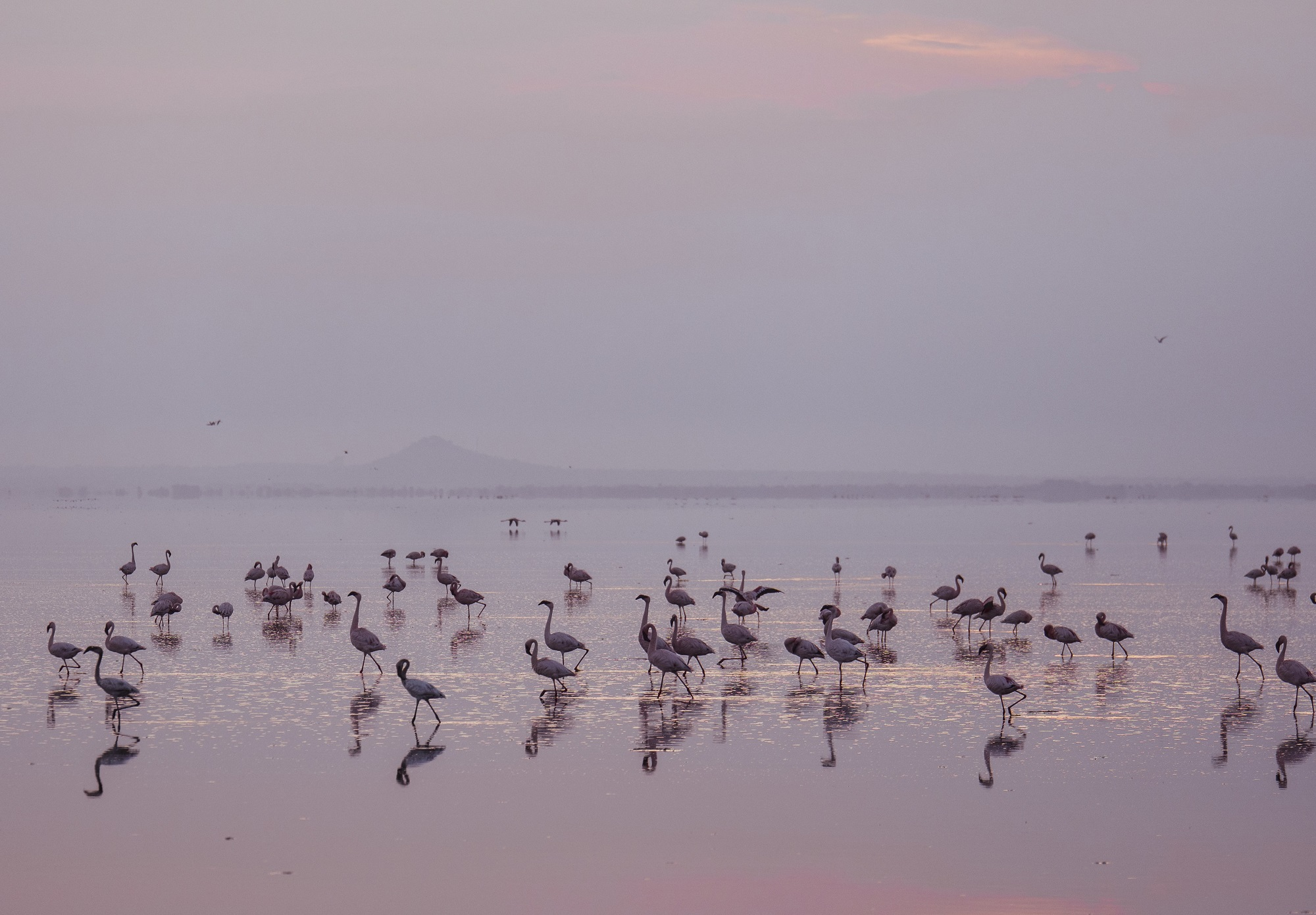 Lake Manyara pink flamingos